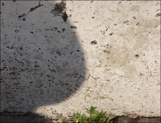 San Zaccaria_clip_image002_0019